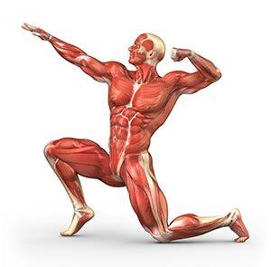 Hoe spieren groeien